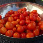 Tomaten anbauen auf dem Balkon