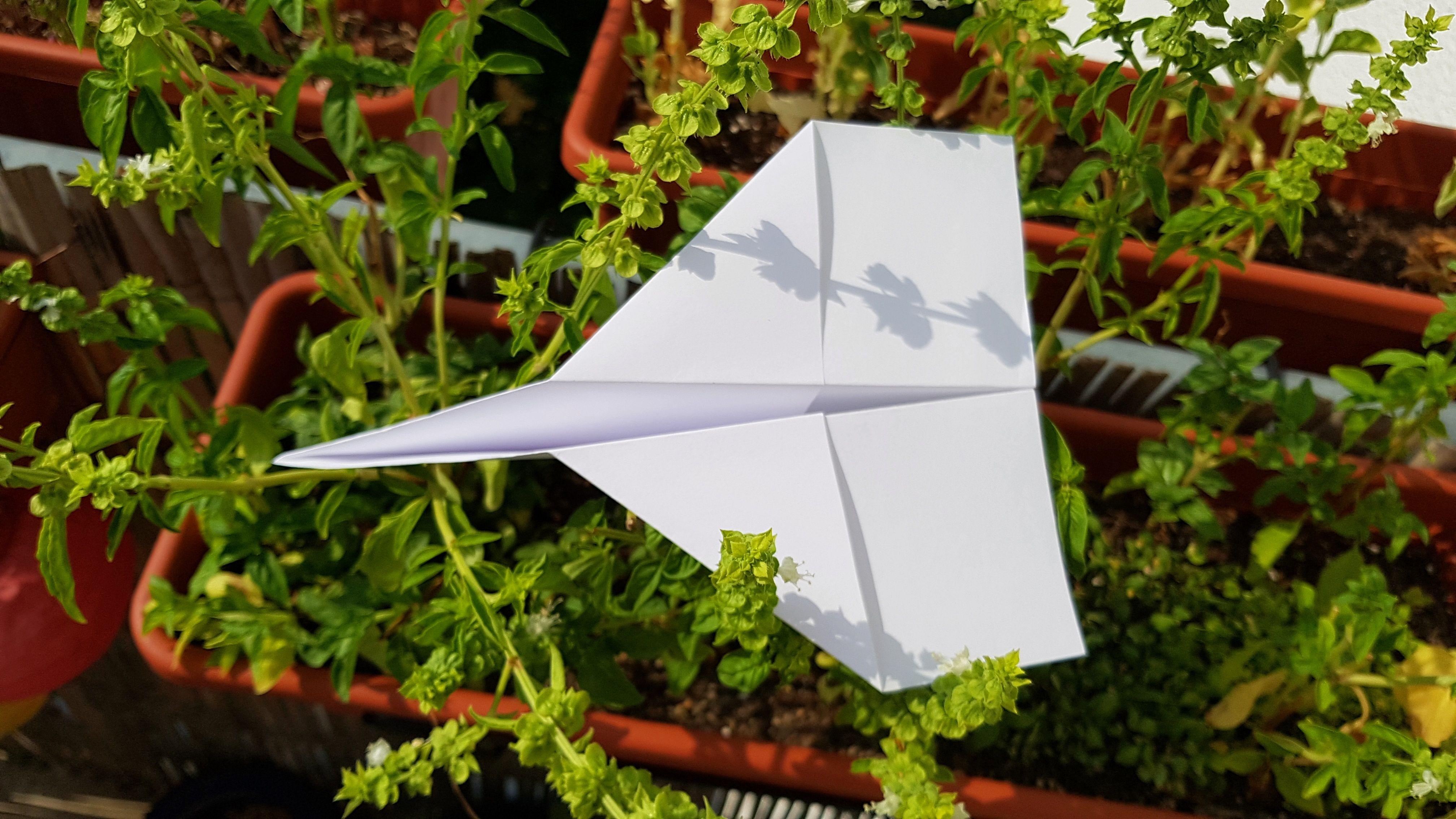 Papierflieger im Kräuterbeet