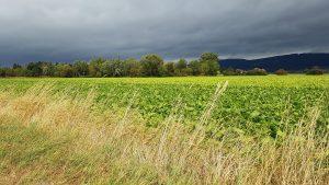 Felder entlang des Weser-Radwegs