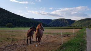 Pferde am Weser-Radweg