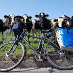 Radtour entlang des Weser-Radwegs Kuhlobby 4